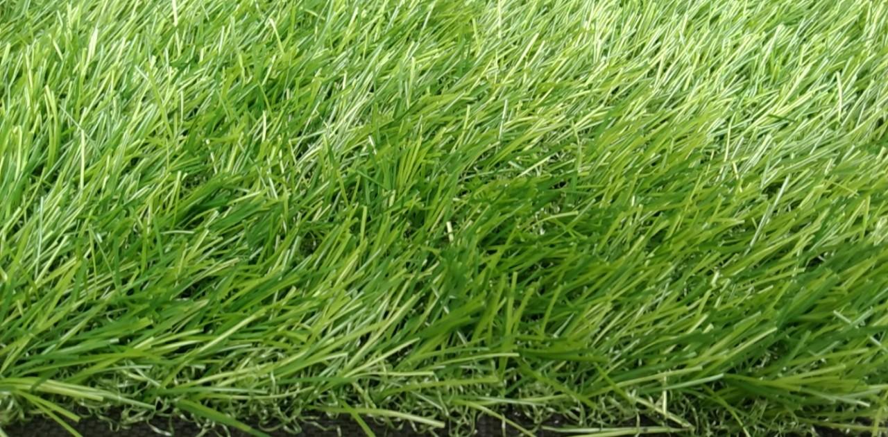 cung cấp cỏ hồ chí minh