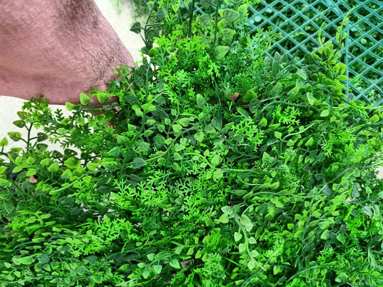 tấm cỏ phú quý