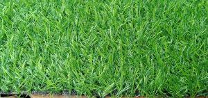 Thảm cỏ nhân tạo hồ chí minh
