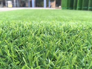 thảm cỏ lót sân vườn bình dương