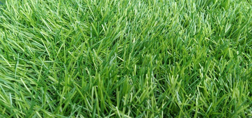 cỏ nhân tạo phú yên
